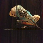 Parrots in the lobby