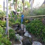 Birds & koi pond