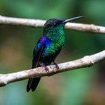 lots of little hummingbirds