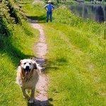 Walking along the banks of the River Barrow