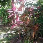 Lush garden.