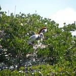 Pelican Hatchlings
