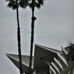 Googie architecture across the street at Hope University
