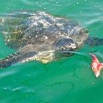 tortugas gigantes en Organos