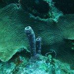 sea tube