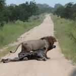 sur le chemin des safaris