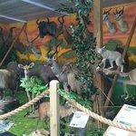 kids loved the safari area