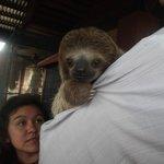 Baby 3 toe Sloth