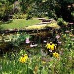 water garden on property