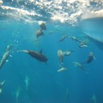 GOPRO photo taken while snorkeling and being pulled along the side of Sierra's boat.