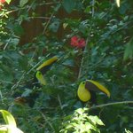 Toucans seen from the outdoor cafe