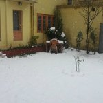 Happy cottage Snowfall in garden lawn 11th March 2014