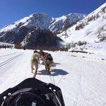Sortie chiens de traîneau à Valloire