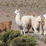 Fra turen i Andes