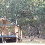 Cottage - with kangaroos