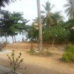 Palmen im Resort