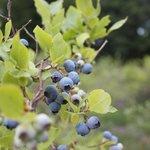Nos arbre fruitier