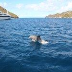 Rencontre avec les dauphins retour des Saintes