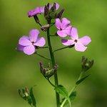 Shenk's Ferry Wildflower preserve