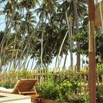Пальмовая роща сразу за забором отеля