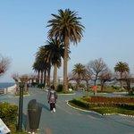 Piquio gardens
