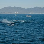 A large pod of Humpback Whales came right along side