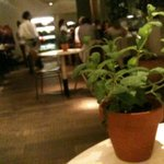 An herb on your table instead of flowers