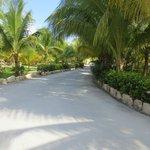 Driveway of the resort