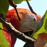 Macaw closeup at the beach!