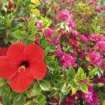 les belles fleur du jardin