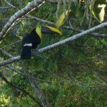 Waking to the Toucans