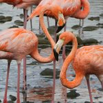 Flamingoes in the national park