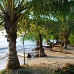 Front beach coconut trees