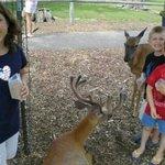 the kids love the deer