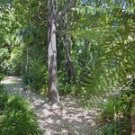 Glade area with NZ Native trees for peaceful rest in the shade