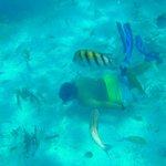 Eddie underwater