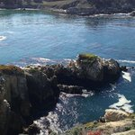 point lobos trail run