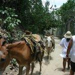 Local rush hour traffic on way to waterfalls in Yelapa