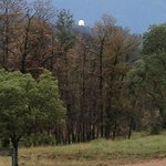 Siding Spring Observatory through remnant burnt trees