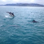 Jumping dusky dolphins