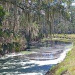 Beautiful Spanish moss hanging over the creek