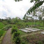 Veggie gardens running down the right side