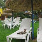 Caribbean World Sun Garden Hammamet