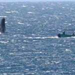 HUGE whale offshore of hotel. Bummer my camera was not in focus!!