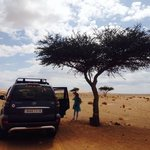 Sahara Desert tree