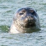 Seal Watching on the Freeport Water Taxi & Tour boat
