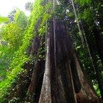 The Big Tree with Blu Anda