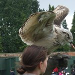 Eagle Owl receives a reward