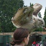 Eagle Owl receives a reward