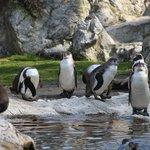 пингвины)))